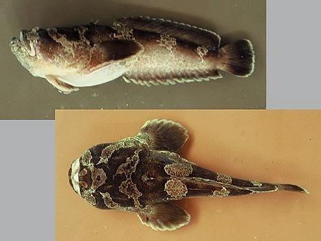 Buceo Uruguay Fauna