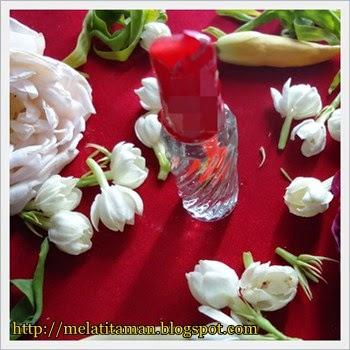 Cara Membuat Jasmine Oil dari Bunga Melati