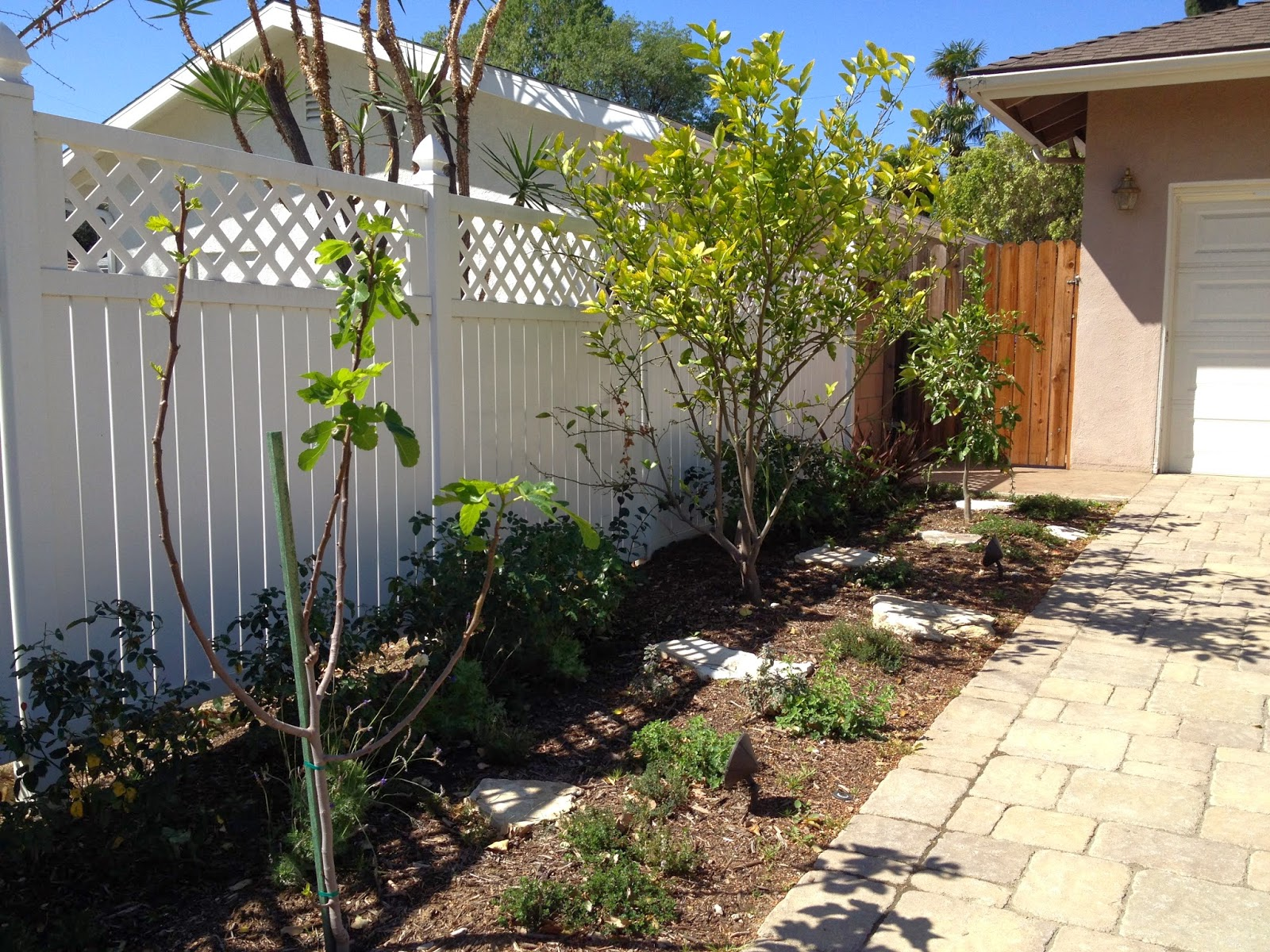 How Does My Garden Grow?: Front Yard Fruit Trees - Spring ...