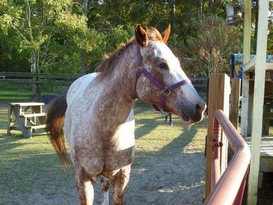 6127459 - Therapeutic Horseback Riding: Kindness Matters