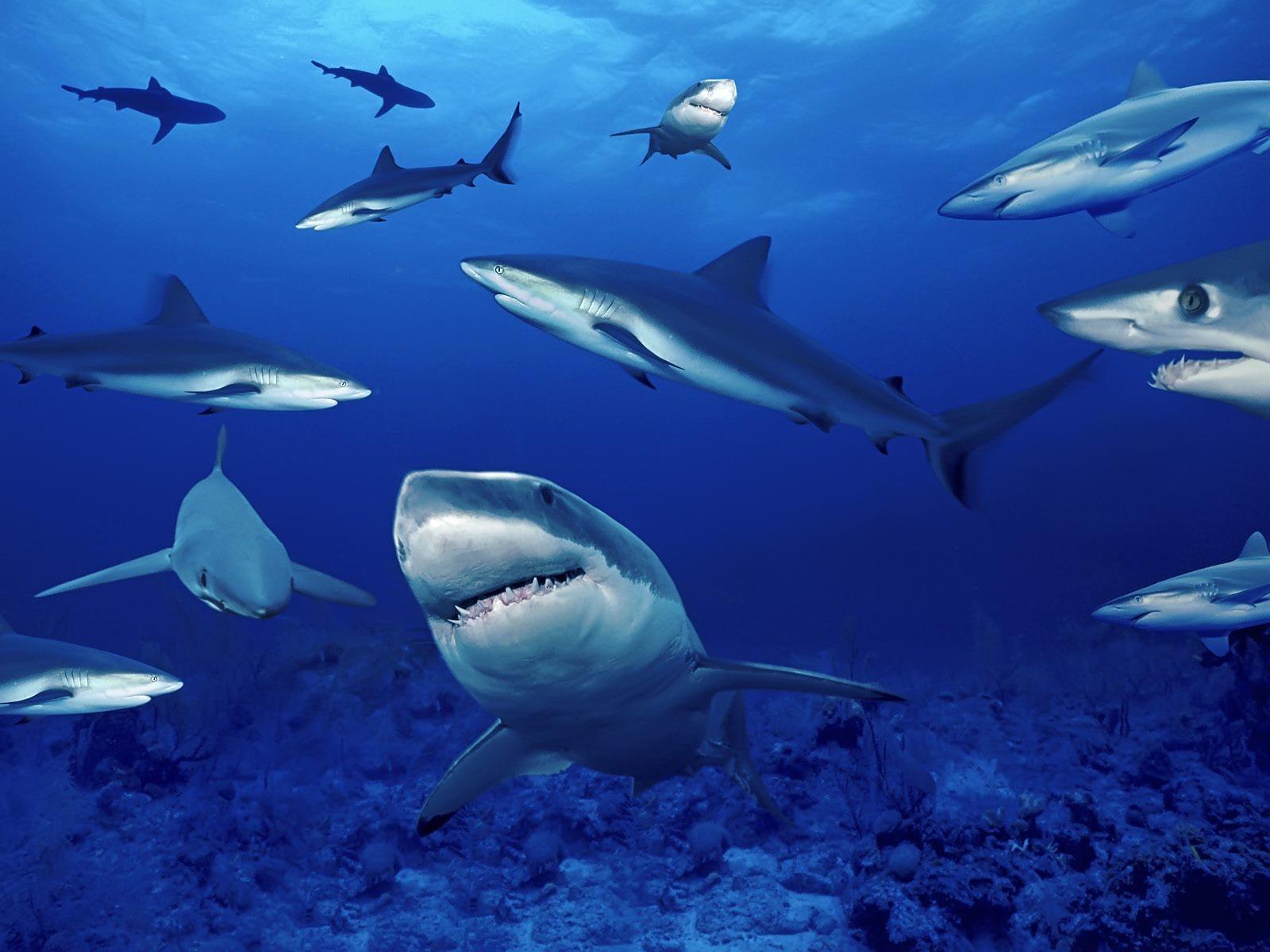 2560x1600 ocean sharks - photo #16