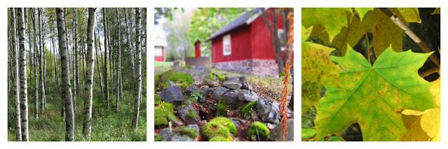 Birken rotes Haus und herbstliche Blätter in Schweden