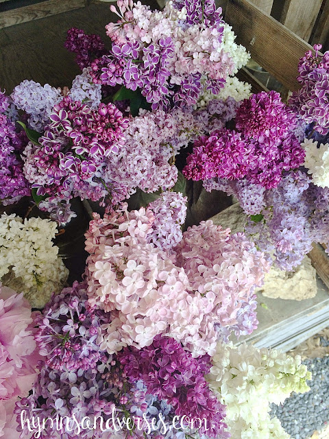 Lancaster County Lilac Stand