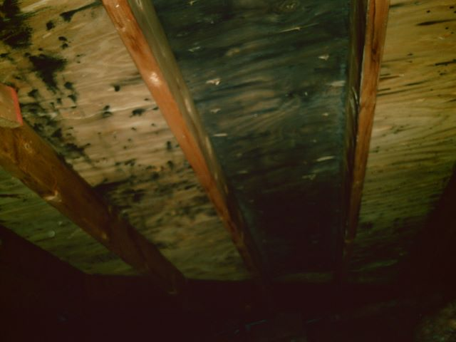 Mold removal cost how to kill black mold attic mold remediation solutioingenieria Images