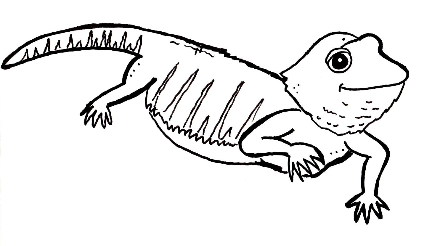 Bearded dragon coloring pages