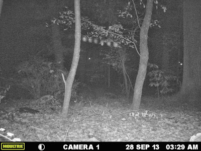 Light Anomalies Captured On Trail Cam Joshua1