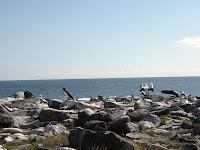 Espanola Island Land of Blue Boobies and Albatross