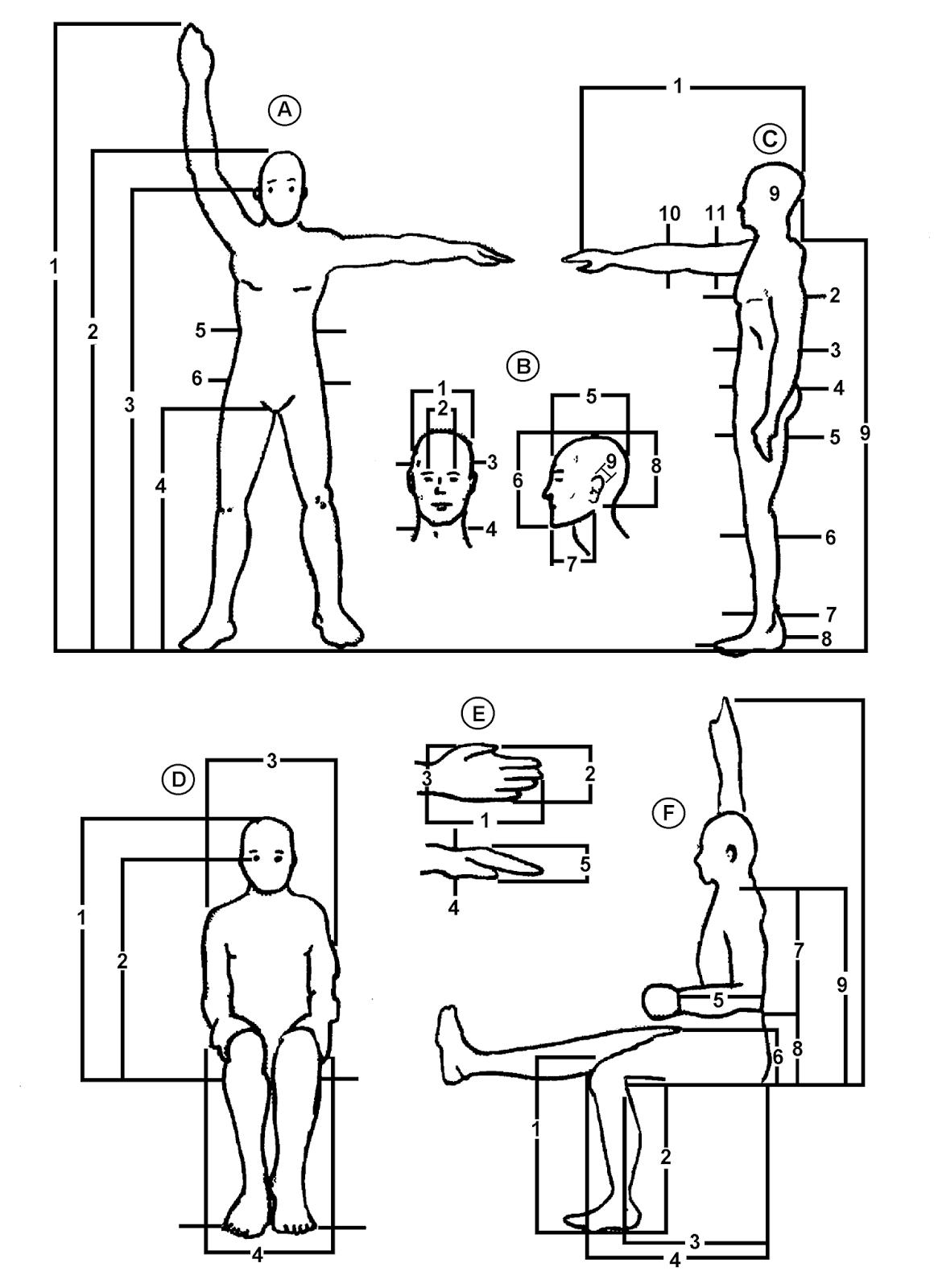 Tecnoideas antropometria ergonomia medio ambiente for Antropometria y ergonomia