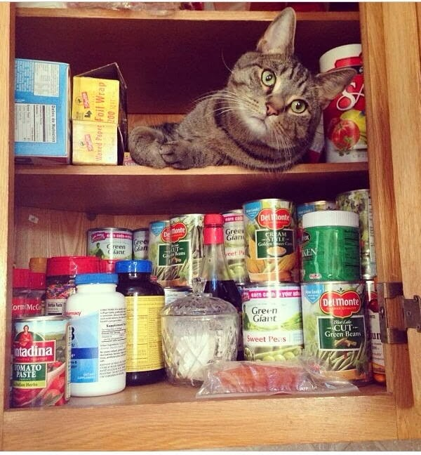 Funny cats - part 89 (40 pics + 10 gifs), cat on kitchen cabinet