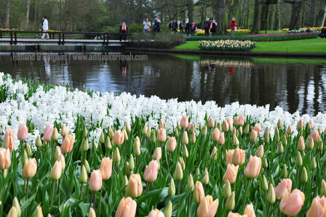holiday to holland and belgium with premium beautiful at keukenhof with white tulips