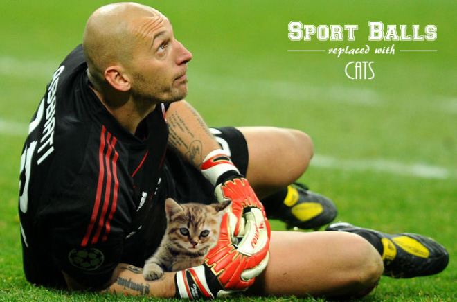 Sports Equipment Replaced With Cats