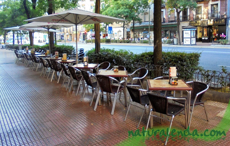 mesas en fila con arbusto