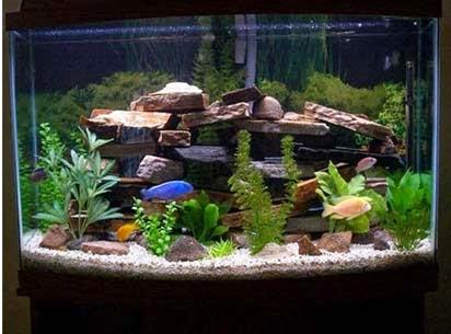 Jasa Dekorasi Aquarium