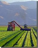 Fresno Agriculture