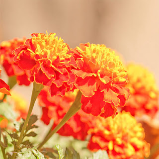 http://www.szivarvanydesign.hu/2012/01/005-naplemente-uveg.html