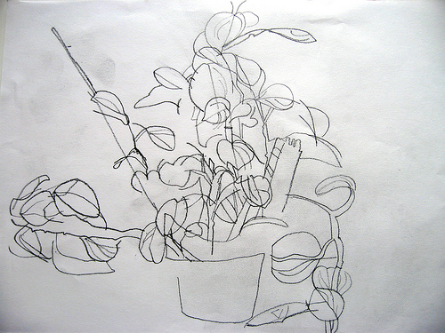 Contour Line Drawing Of A Plant : Right brain draw