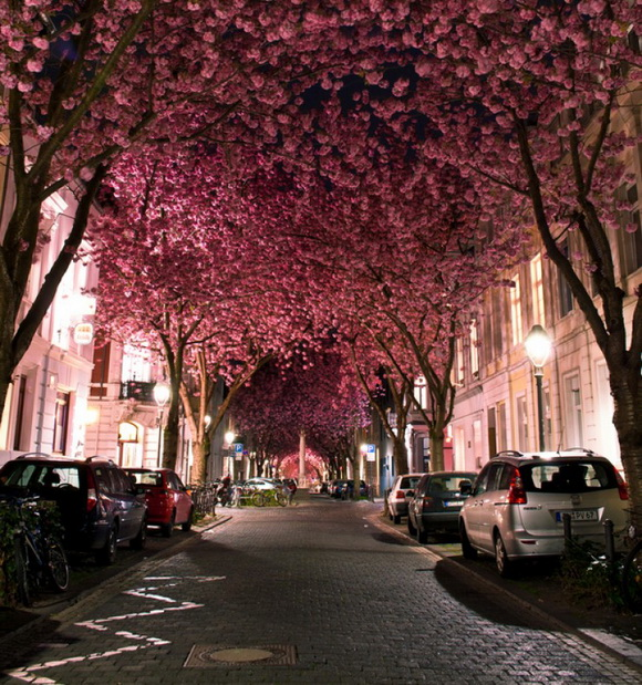 Túnel Cherry Blossom - Bonn - Alemanha
