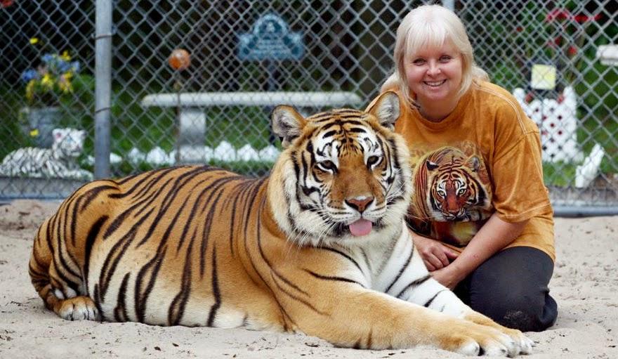 mujer jugando con tigres
