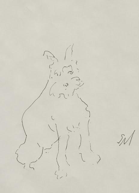 schnauzer, dog, puppy, fluffy, arte, seated, ink, line-drawing, drawing, study, sketch, portrait, art, S. Myers, Sarah Myers, minimalist, animal, fur, black on white