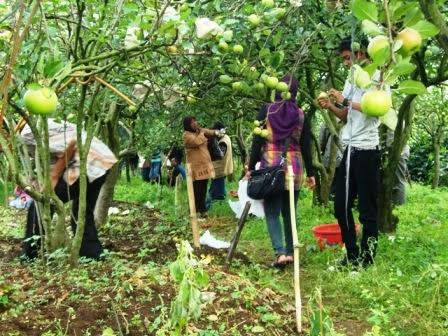 Tempat Wisata Malang Batu - Agrowisata