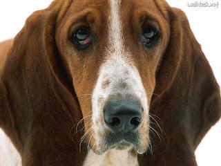 Cão atira no próprio dono durante caça