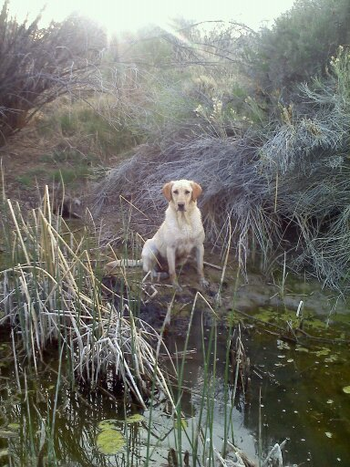Canyon Breeze Retrievers