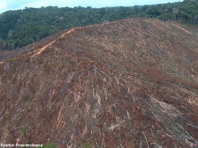 Desmatamento, MapBiomas, perda de habitat, Biomas, degradação ambiental, amazonia, cerrado, mata atlântica, amazônia, mata atlantica, floresta, monitoramento de desmatamento, uso do solo