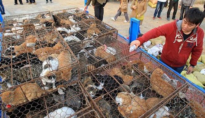 Polisi China Gagalkan Penjualan Ratusan Kucing Untuk