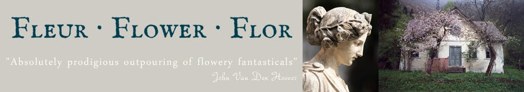 Fleur ∙ Flower ∙ Flor