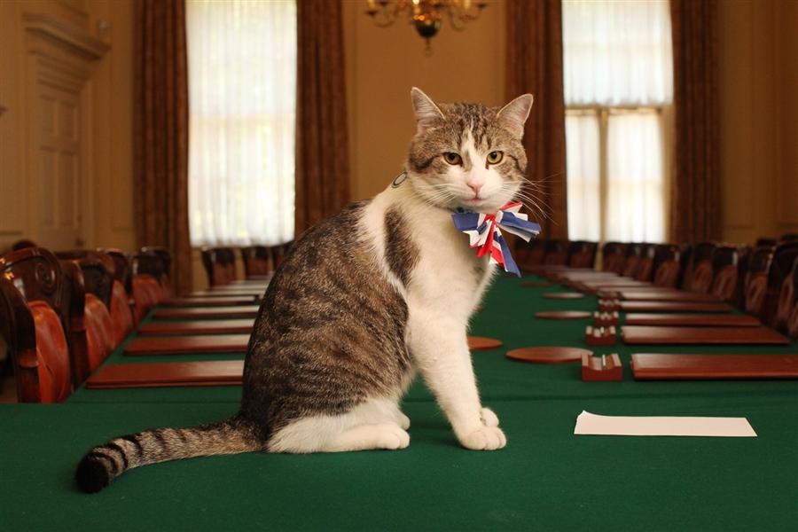 Скандальный английский кот Ларри - фото 1