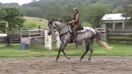 Many horses are started Western and eventually switch to English