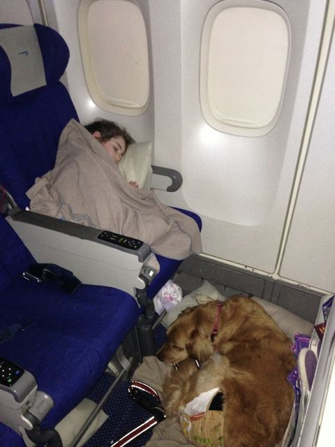 Airplane flights for dogs 2017 for Small dogs on airplanes