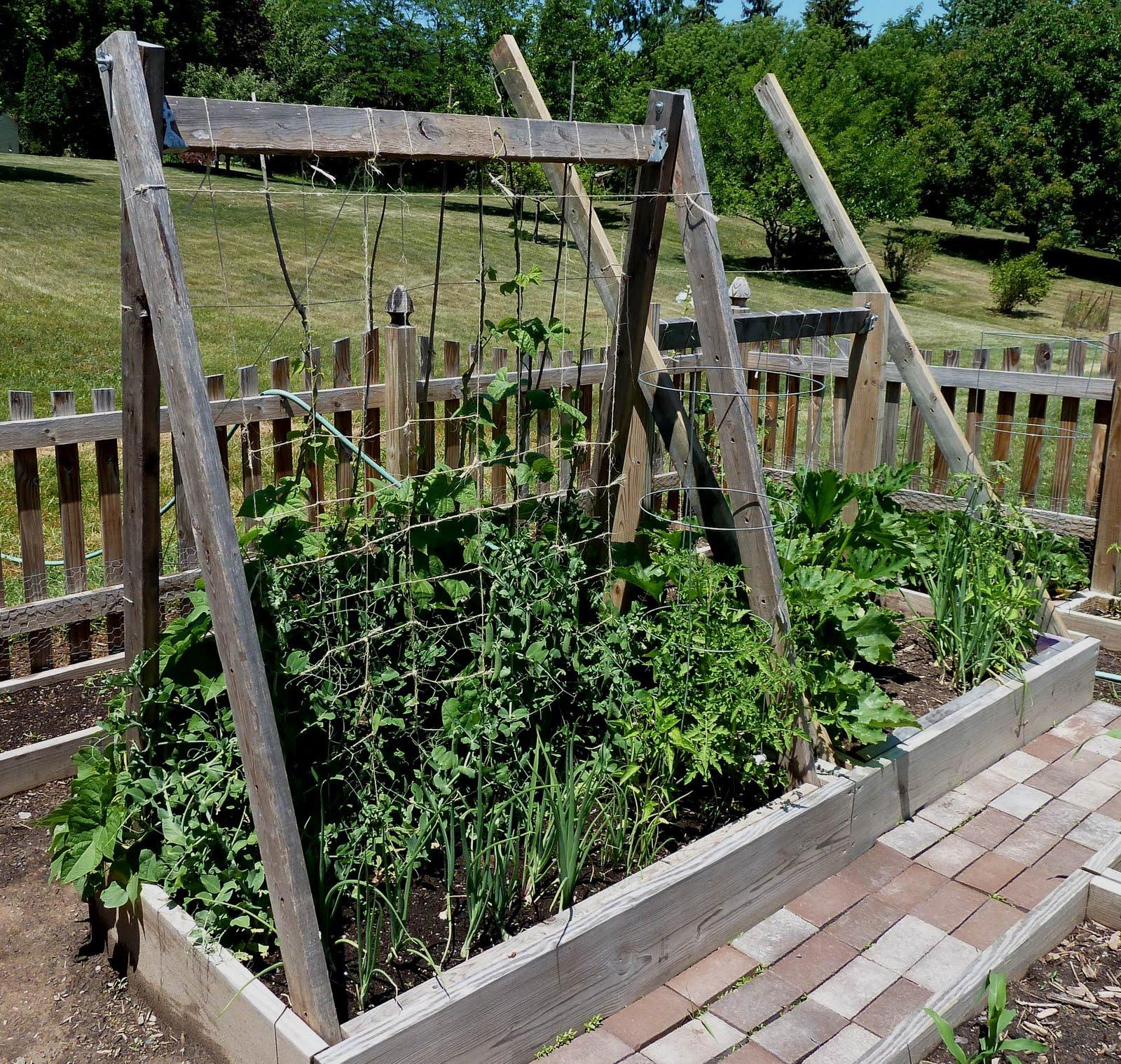 lean to green bean trellis frame garden and landscaping pinterest