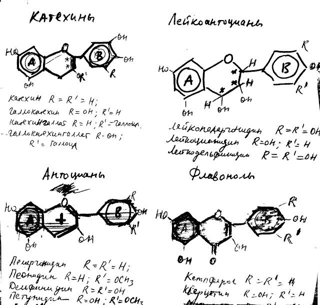 Строение и структура основных флавоноидов в виноградном вине по М. М. Скурихину