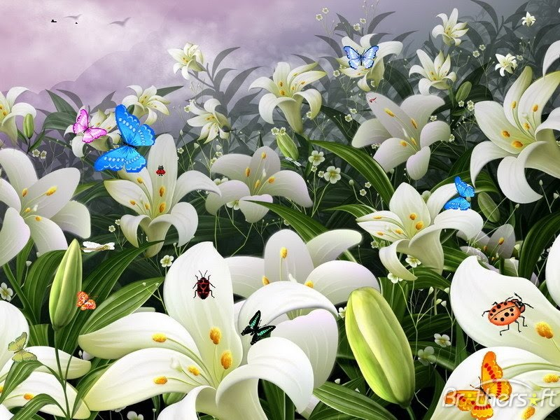 pictures of flowers and butterflies. flowers and butterflies