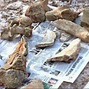 Житель Башкирии нашел кости шерстистого носорога