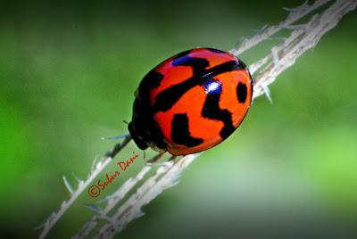 Inilah 5 Serangga Pembawa Keberuntungan di Dunia