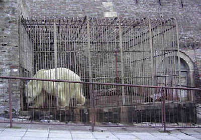 zoo animals in cages