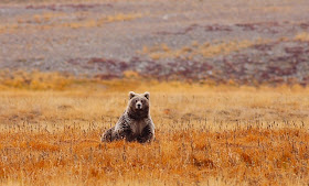 Deosai-National-Park-4.jpg