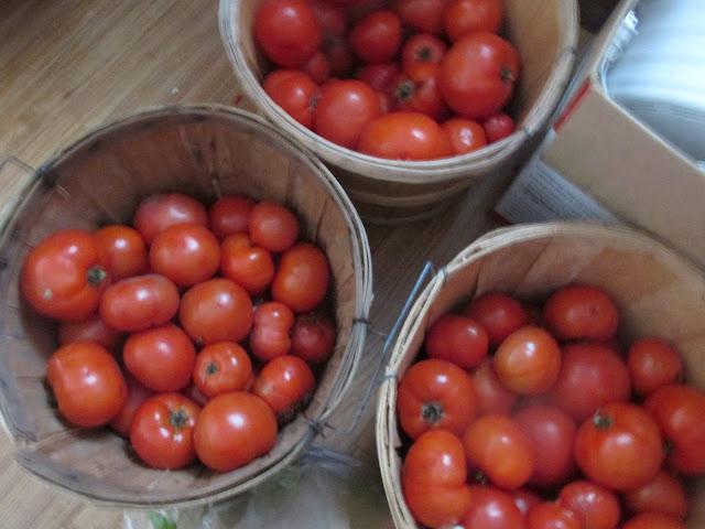Garden Update 8/26/15~ Picked tomatoes -Vickie's Kitchen and Garden www.vickieskitchenandgarden.blogspot.com