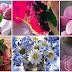 Hermosas flores y rosas animadas gif, Imágenes para compartir y regalar en facebook.