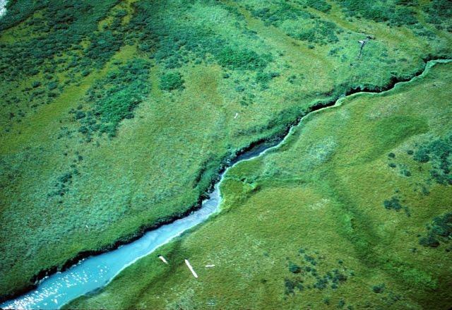 Taku River Estuary 3