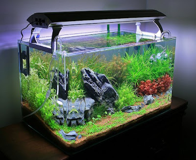 Live Plants for Nature Aquariums