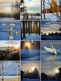Instagram med fokus på naturbilder