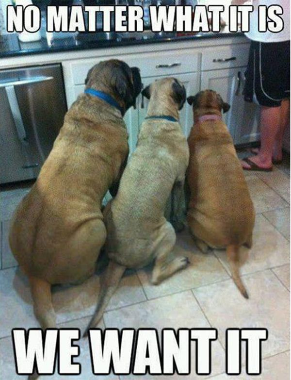Funny animal pictures with captions, animal caption pictures, funny caption pictures, animal memes