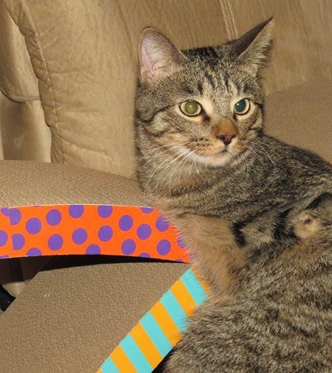Mercury o gato de 2 patas