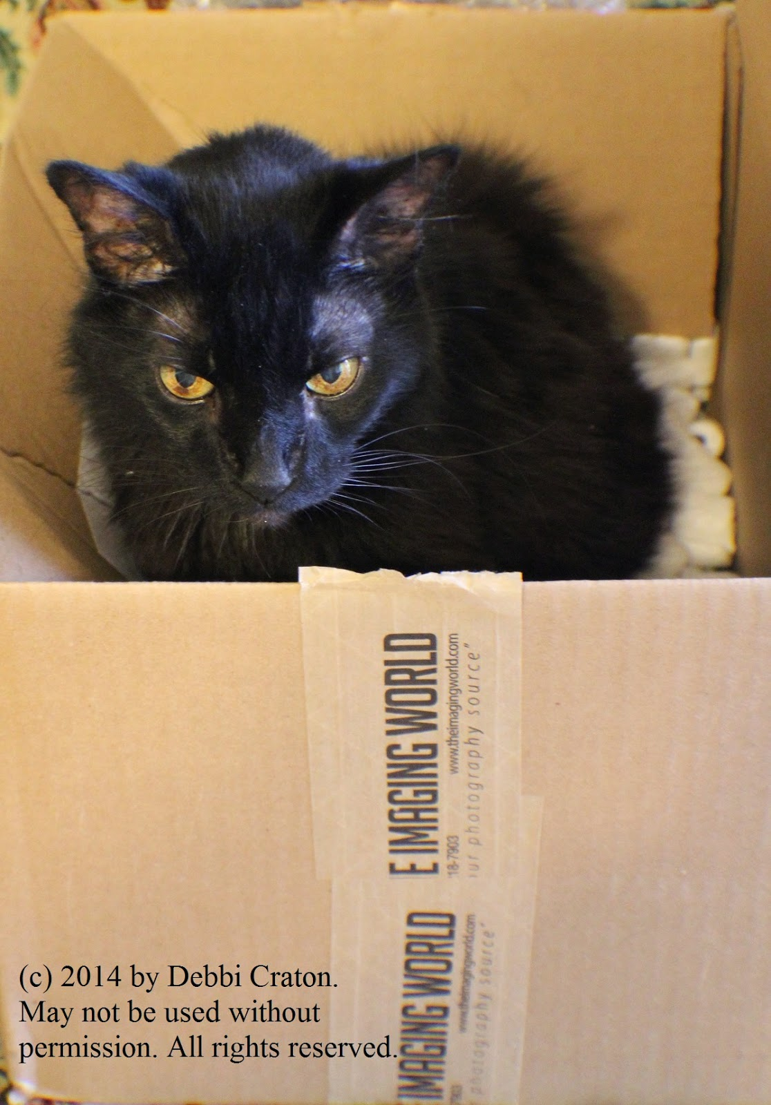The Guiness Blog by Guiness the Cat