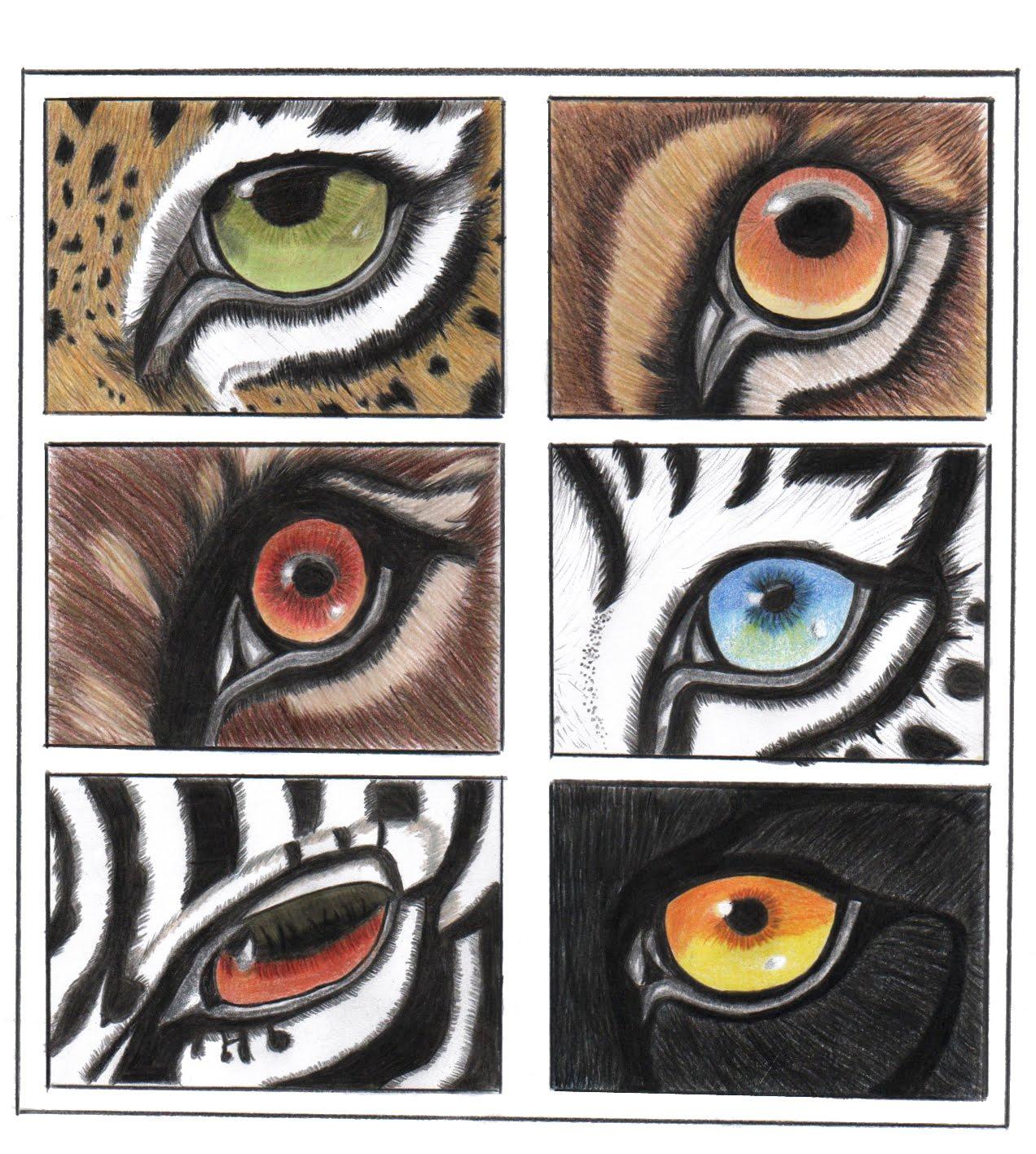 Las Cosas de Carocha Ojos animales