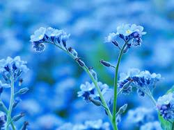O albastrea de la un trandafir rosu!:)