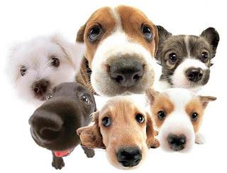 perros problematicos